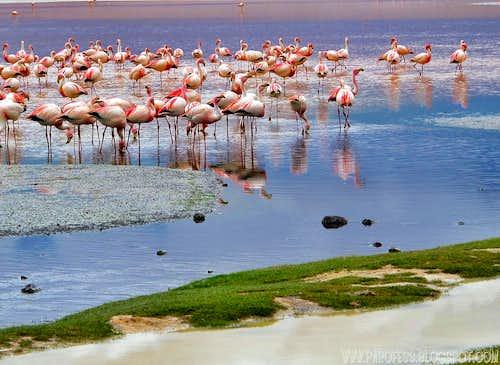 Flamingoes...
