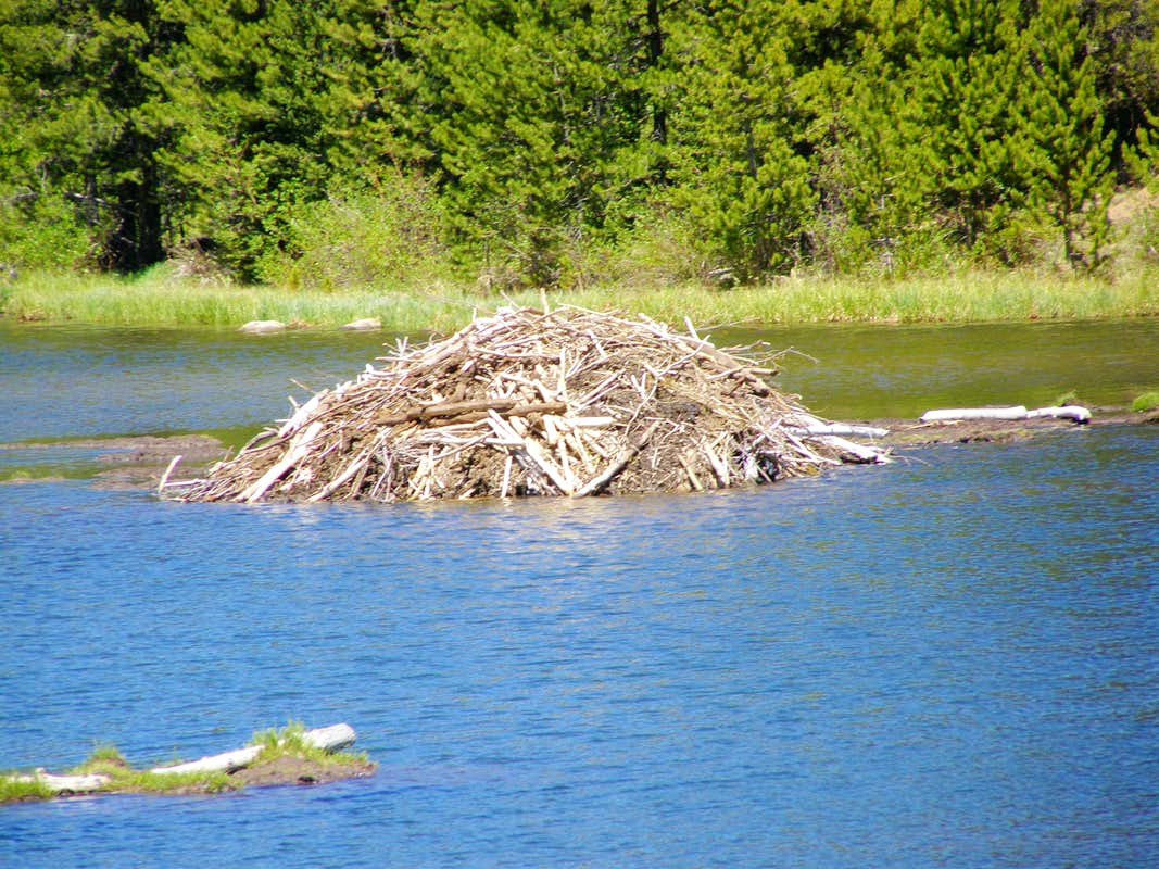 Beaver lodge diagram - photo#20