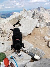 Duchess sniffing the geo marker