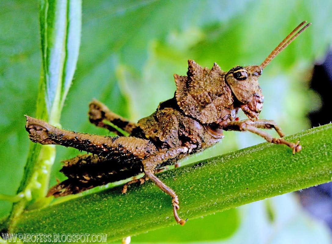 Smiley face Grasshopper : Photos, Diagrams & Topos : SummitPost