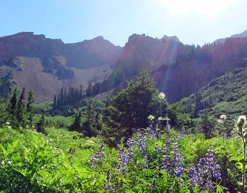 Rugged mountains over purple wildflowers