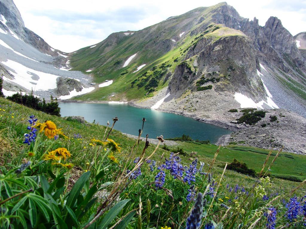 Capitol Lake wildflowers