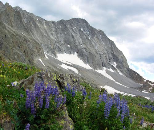 Capitol Peak over wildflowers