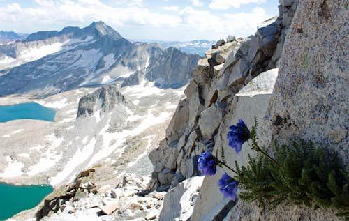 Wildflowers on northeast ridge