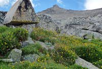 Wildflowers below K2 boulderfield