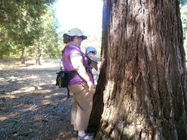 meeting my first giant sequoia