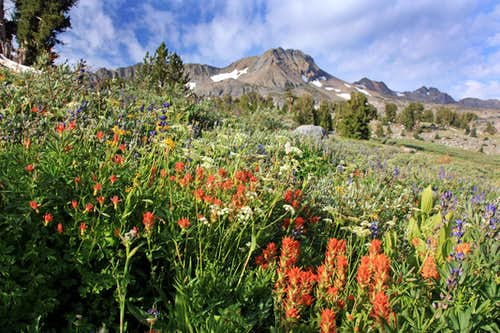 Indian Paintbrush and Round Top