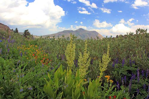 Assorted flowers and Red Lake Peak