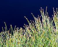 Water / Grass