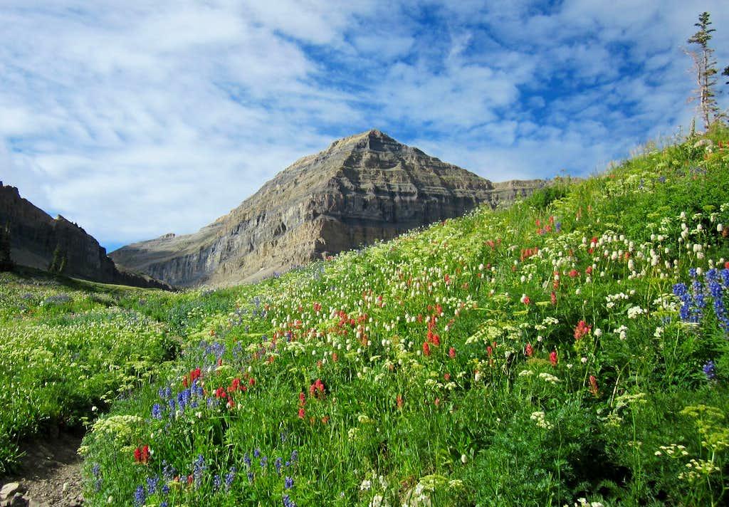 Flower show - Mt. Timpanogos