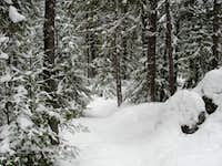 Breaking trail during a snowstorm