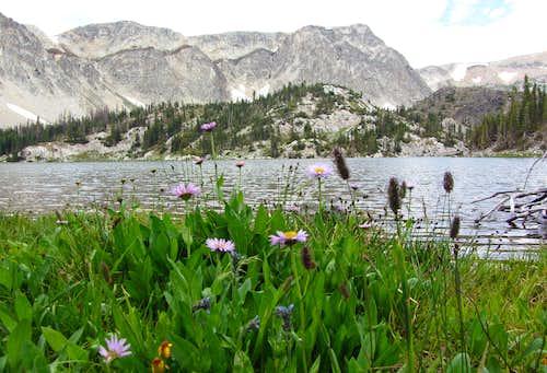 Mirror Lake wildflowers