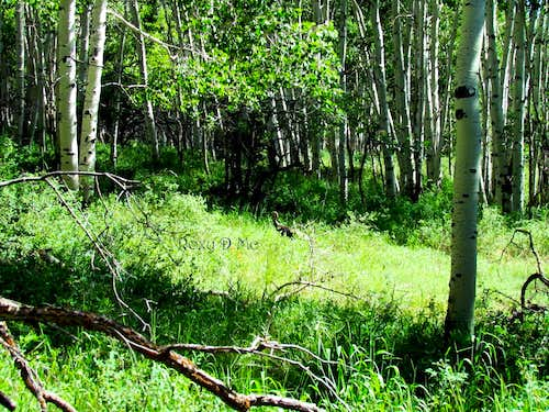 Upset Turkey