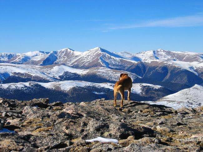Sopris dog on the summit of...