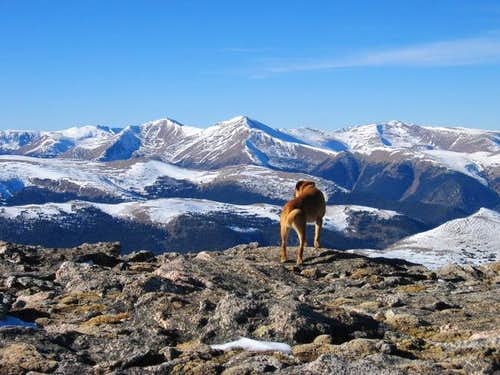 Sopris dog on the summit of...