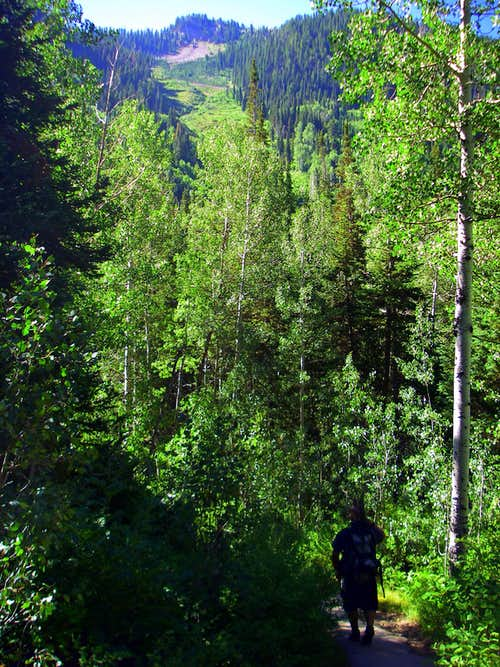 Hiking White Pine