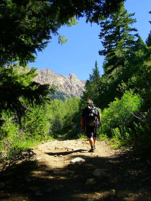 Hiking White Pine Fork