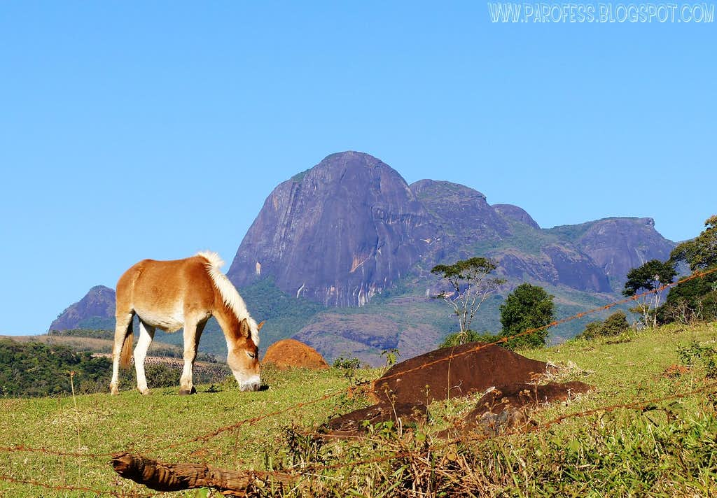 Nice donkey and Papagaio Peak on the back