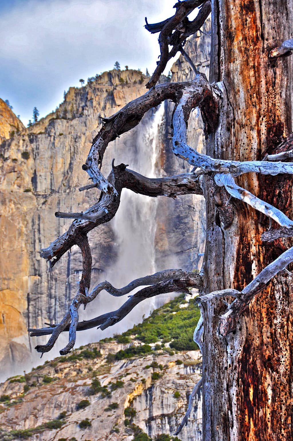 Dead Tree and Yosemite Falls