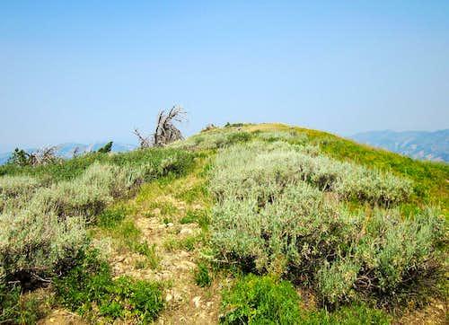 Big Elk Mountain summit