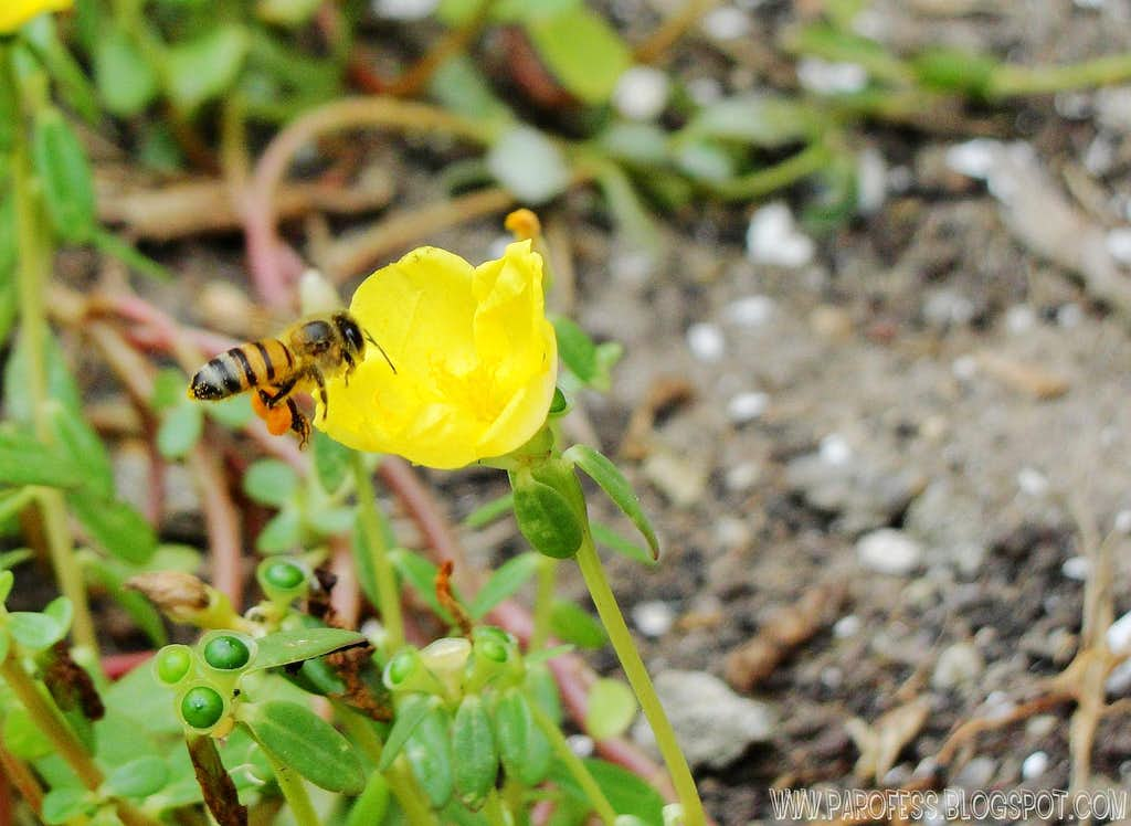Bee and little flower