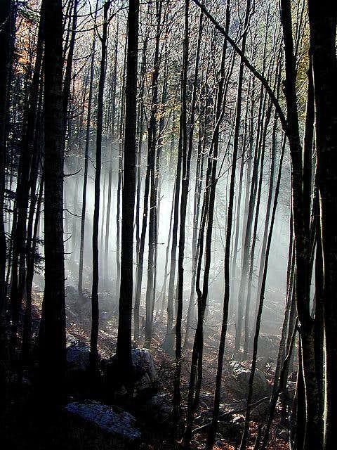 Forests near Crno jezero...