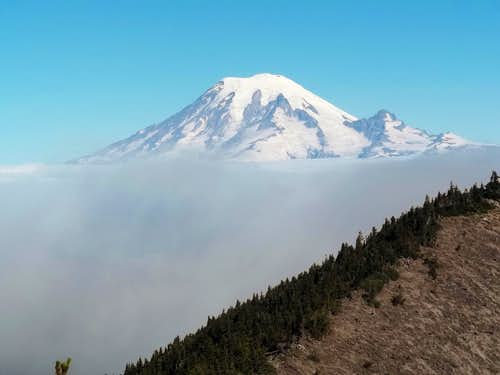 Rainier from Hogback Mountain