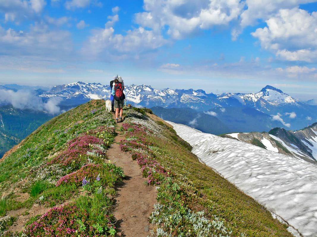 Mountain Peak Walking Shoes