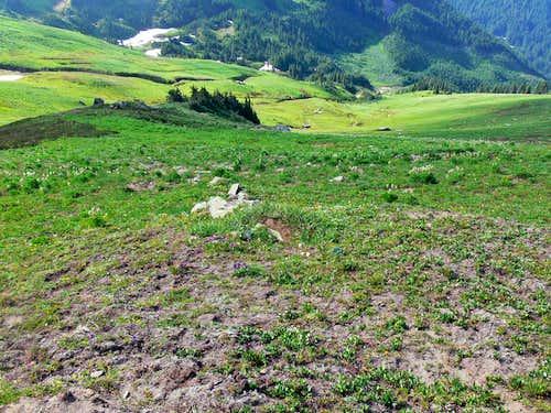 Greenery on White Mountain