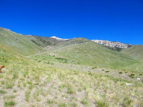 open terrain