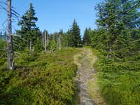 Trail on top of Kowarski Grzbiet