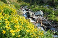 Stewart Draw wildflowers & stream