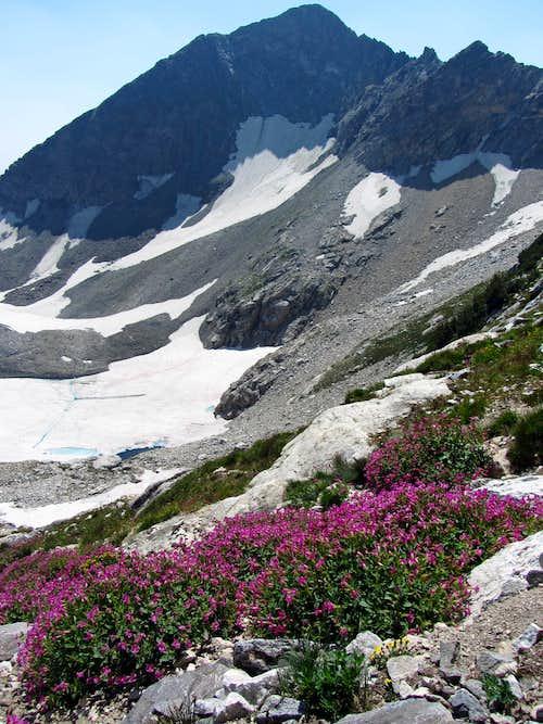 Static Peak & wildflowers