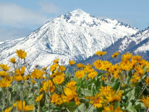 Cashmere Mountain with Flowers