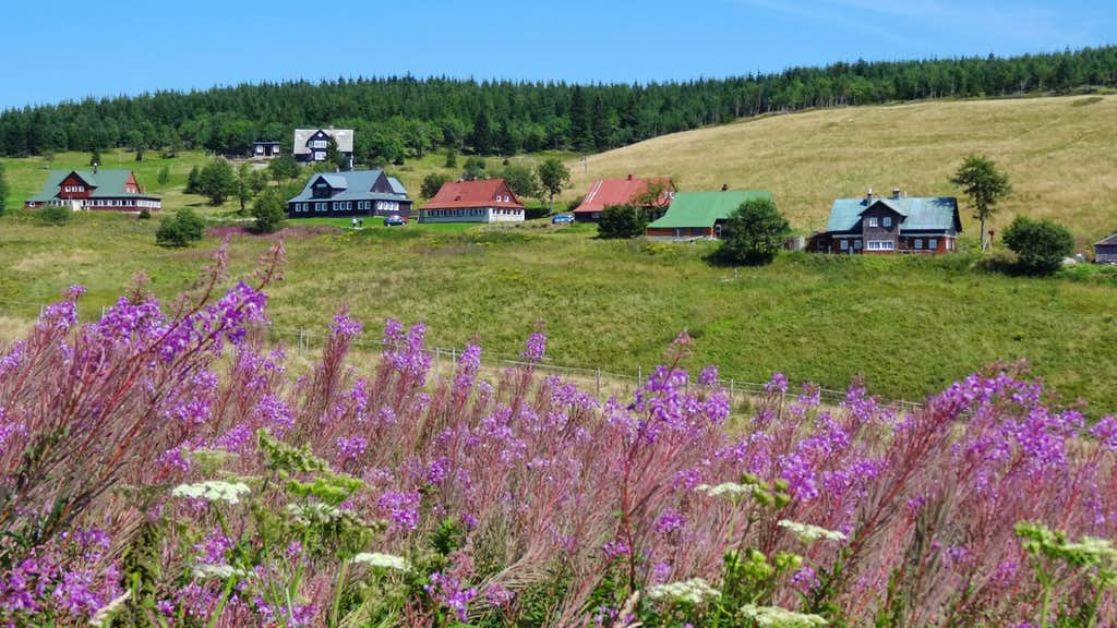 Fireweed and upper Malá Úpa