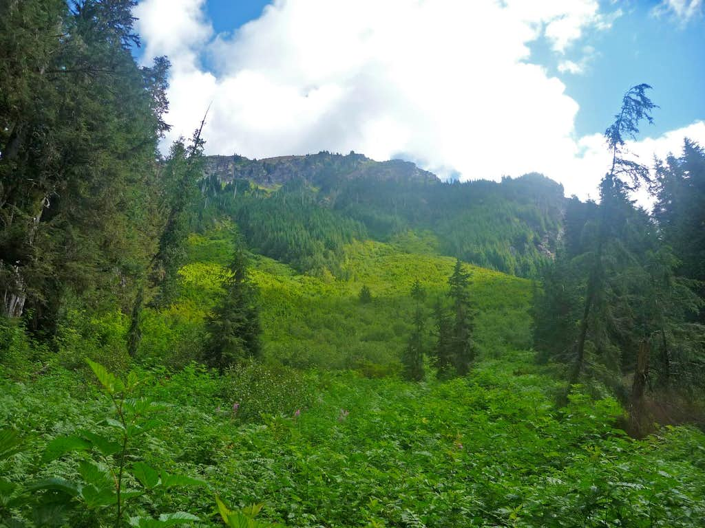 Green Scenery Above