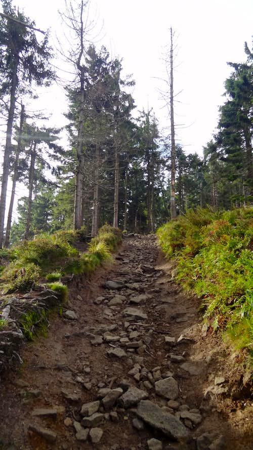 Climbing to Malinowa Skała