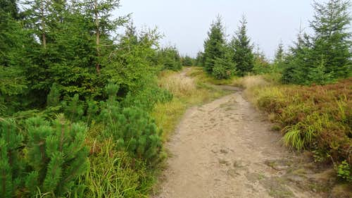 Trail on top of Malinów