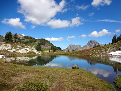 Yellow Aster lakes