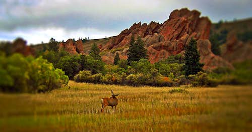 Whitetail in Roxborough