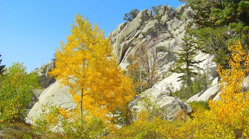 Bear Canyon Aspens.