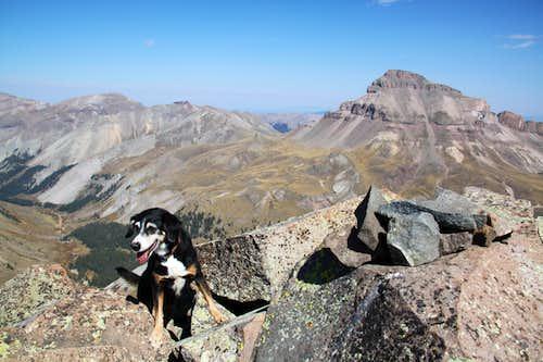 Duchess on the summit