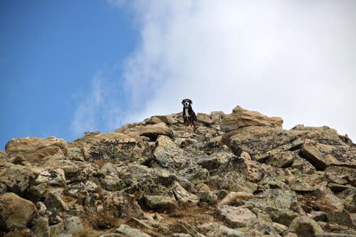 Duchess on the short summit ridge