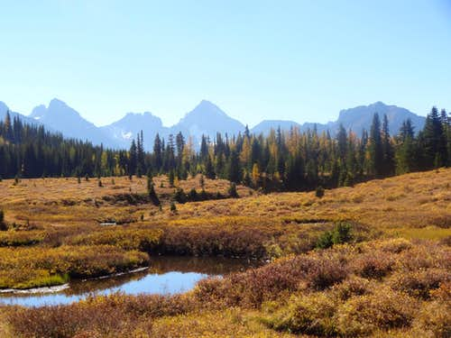 Meadow ~ Chester Lake Trail
