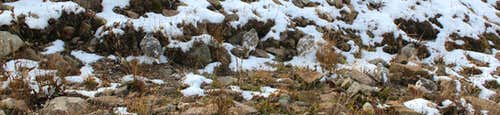 Count the White-tailed ptarmigans!