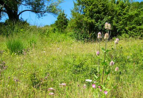 Beurener Heide - Juniper Heathland