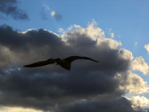 Gull Cloud