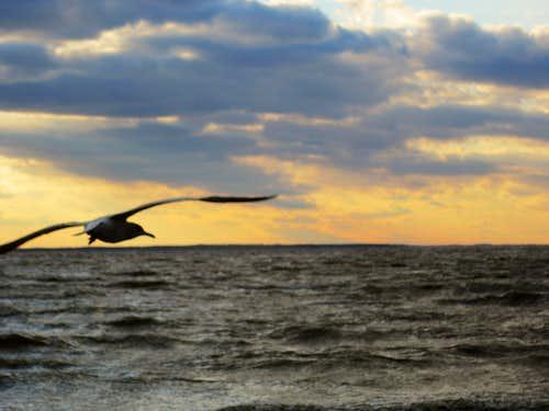 Winged Horizon