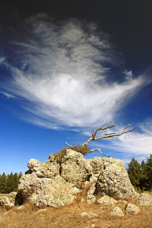 Rock, Branch and Cloud