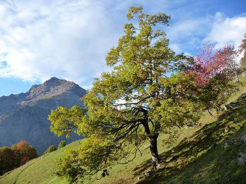 Autumn in Val d\'Ala